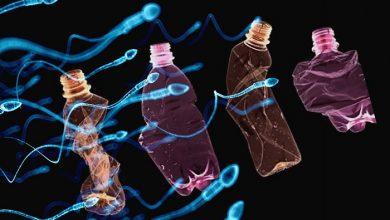 Photo of نقش مواد شیمیایی موجود در پلاستیک در ناباروری مردان